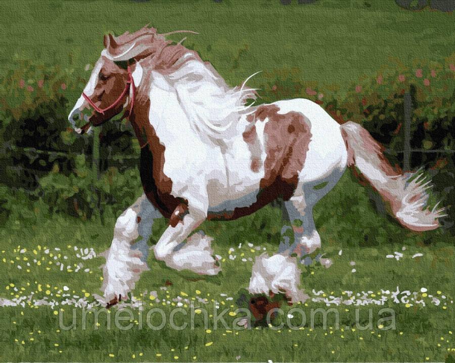 Картина по номерам  Лошадь на пастбище (BRM36485) 40 х 50 см