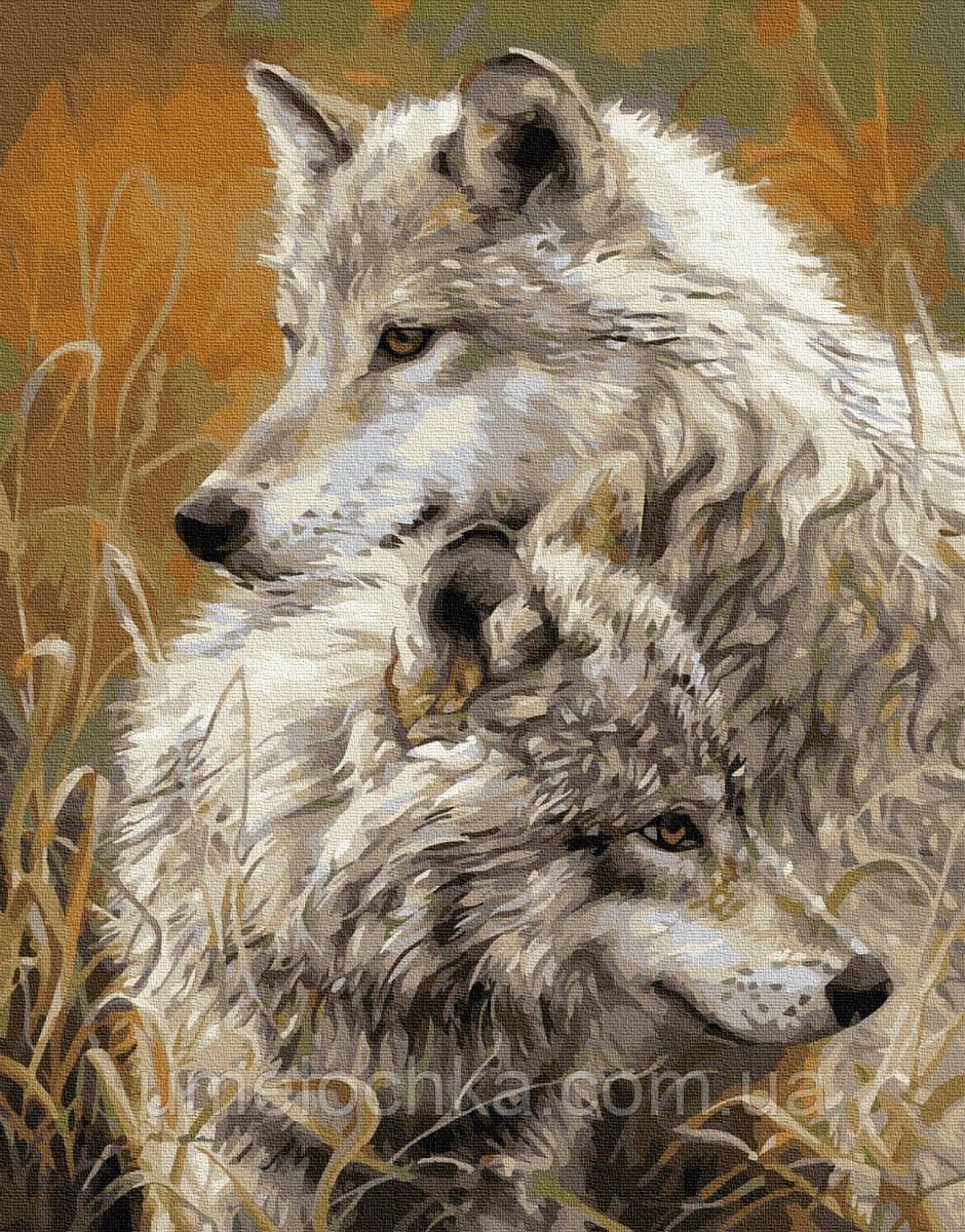 Картина по номерам Волчья нежность (BRM8873) 40 х 50 см