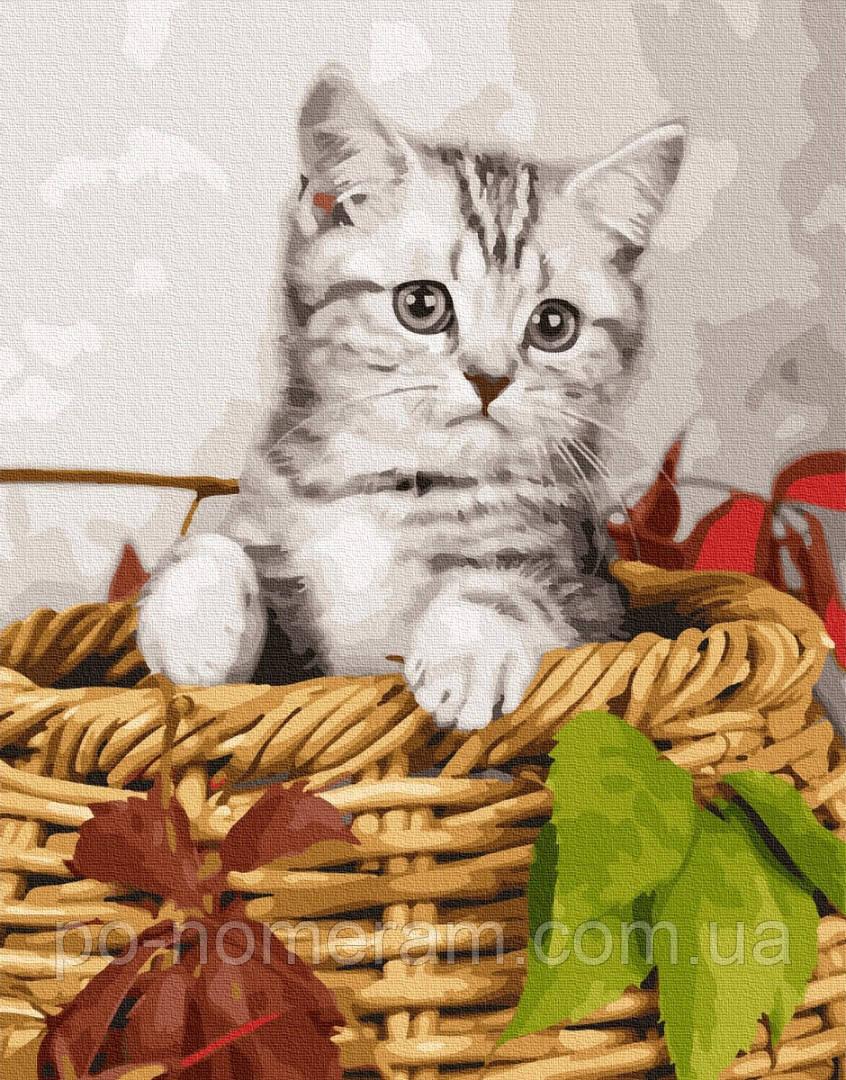 Картина по номерам BrushMe Котёнок в корзине (BK-GX26366) 40 х 50 см (Без коробки)