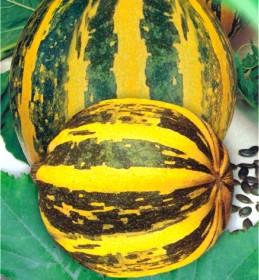 Насіння гарбуза Український багатоплідний, фото 2