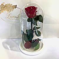 Бордово-малиновая роза в колбе Lerosh - Classic 27 см