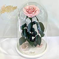 Розовая Жемчужная роза в колбе Lerosh - Lux 33 см