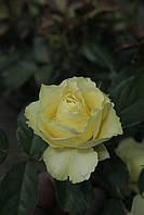 Лимбо (среднее качество), фото 3
