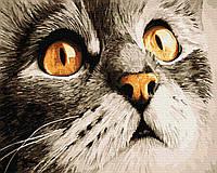 Картина рисование по номерам Brushme Погляд котика Сірка  набор для росписи, краски, кисти, холст BK-GX23782