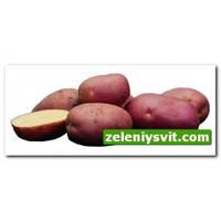 Картофель Роко 3кг ФХ Лилия