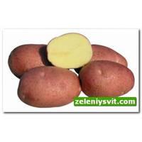 Картофель Белларосса 3 кг ФХ Лилия