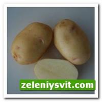 Картофель Невский 3 кг ФХ Лилия