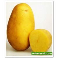 Картофель Колетте 3 кг ФХ Лилия
