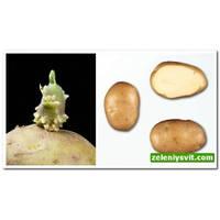 Картофель Минерва 3 кг ФХ Лилия