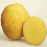 Картофель Винета 3 кг ФХ Лилия