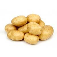 Картофель Аннушка 3 кг ФХ Лилия