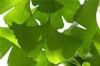 Гинкго билоба  (лист),  50 грамм