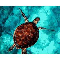 Картина рисование по номерам Mariposa Черепашка 40х50см Q2154 набор для росписи, краски, кисти, холст