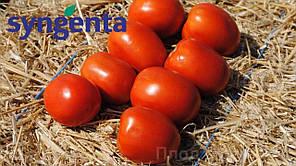 Чибли F1 семена томата, 2500 семян — томат детерминантный,  высокие вкусовые качества, Syngenta, фото 2