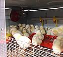 """Брудер для цыплят бройлеров на 150 голов """"БРОЙЛЕР-М"""" (масштабированный)., фото 3"""