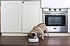 Умная Миска-весы для животных Xiaomi Petkit Fresh Antibacterial Pet Bowl 450ml White, фото 6