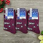 Носки женские махровые высокие GRAND 23-25р коровы фиолетовые, фото 2