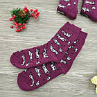 Носки женские махровые высокие GRAND 23-25р коровы фиолетовые, фото 3