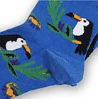 Носки с приколами демисезонные Neseli Coraplar Toucan Blue 7172 Турция one size (37-44р) 20034740, фото 3