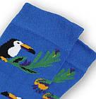 Носки с приколами демисезонные Neseli Coraplar Toucan Blue 7172 Турция one size (37-44р) 20034740, фото 4