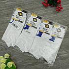 Носки с приколами демисезонные короткие Rock'n'socks 445-27 Украина one size (37-44р) 20033699, фото 8