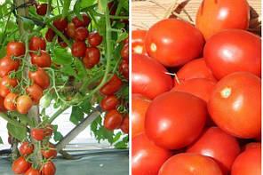 Намиб F1 семена томата, 1000 сем —  детерминантный, ранний, сливка, Syngenta, фото 2