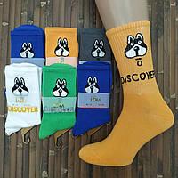 Шкарпетки жіночі високі демі UYUT men cotton socks бавовна DISCOVER асорті 20007584