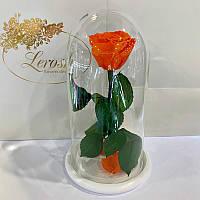 Оранжевая роза в колбе Lerosh - Classic 27 см