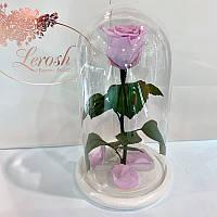 Лиловая роза в колбе Lerosh - Classic 27 см