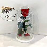 Красная роза в колбе Lerosh - Classic 27 см на белой подставке
