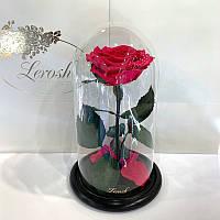 Малиновая роза в колбе Lerosh - Premium 27 см