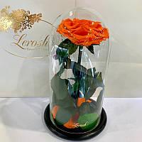 Оранжевая роза в колбе Lerosh - Premium 27 см