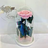 Розовая роза в колбе Lerosh - Premium 27 см