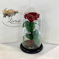 Темно-Красная роза в колбе Lerosh - Premium 27 см