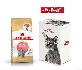 Royal Canin Kitten British Shorthair 2кг + контейнер в подарунок - для кошенят породи британська короткошерста