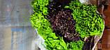 Набір салатів органічний Green for you, 130 г(доставка по Харкову), фото 2