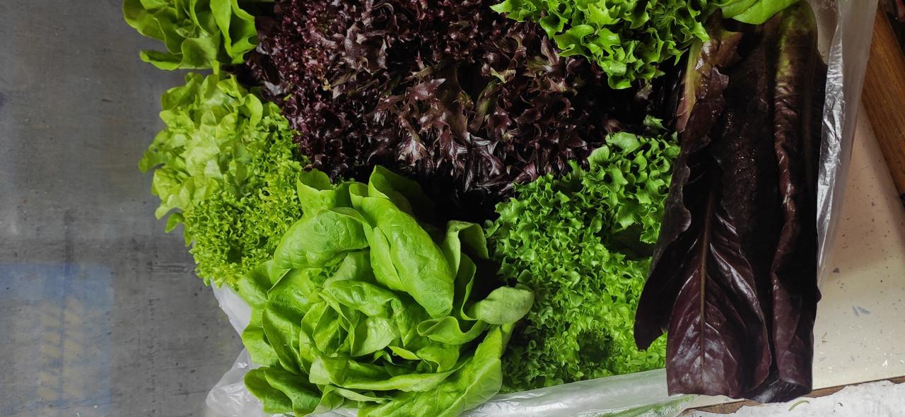 Набір салатів органічний Green for you, 130 г(доставка по Харкову)