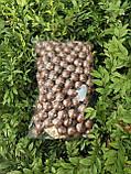 Макадамія горіх екзотичний 500 г на вагу, фото 3