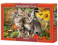 Пазлы Котята 1500 элементы, Castorland, пазл,пазлы castorland,детские пазлы,пазлы для детей