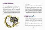 Детская книга Ольга Фадеева: КотоФеи и лесная сказка Для детей от 3 лет, фото 2