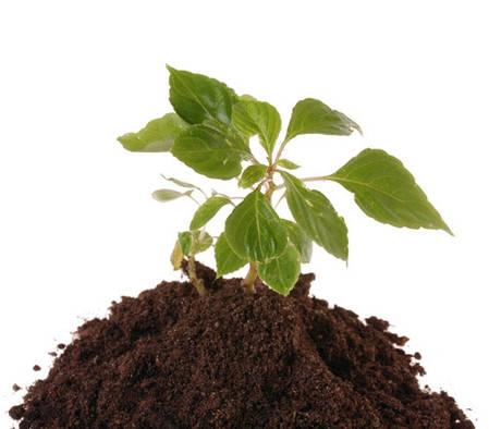 Торфяной субстрат Для рассады, 20 л — для выращивания и пересадки растений, PEATFIELD, фото 2