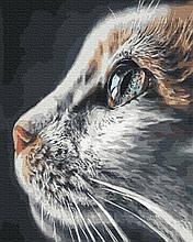 Картина за Номерами Погляд кішки 40х50см RainbowArt