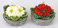 Декоративная свеча Пуансеттия в горшочке 10.5см, 2 вида BonaDi Q00-152
