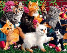 Коты Кошки Котята