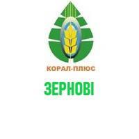 Зернові