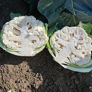 Кабрал F1 семена капусты, 2500 семян — цветная, средняя (75-80 дней), Syngenta, фото 2