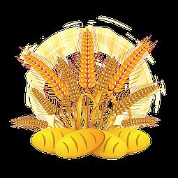 Схема внесения удобрений для пшеницы