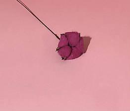 Хлопок сухоцвет ветка малиновый