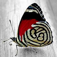 Алмазна Яскрава мозаїка метелик 30х30см DM-179 Повна зашивання. Набір алмазної вишивки