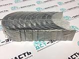 Вкладыши коренные СТД для двигателя Cummins B3.3 C6204218100/3800872 , фото 2